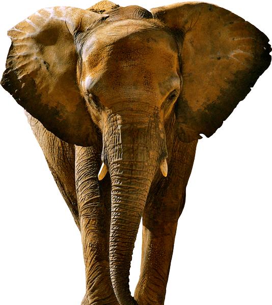 Elephant03_02